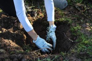 Osmon reforestació neteja medi ambient projecte cervesa Brebel