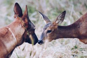 Reserva Wild Forest Santuario Animal projecte cervesa Brebel
